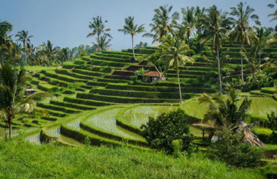 things to do in bali rice terractes