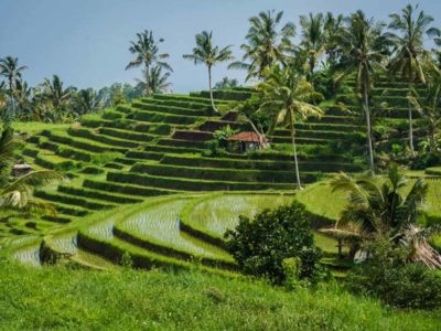 28 Things to do in Bali – Local Insider Tips