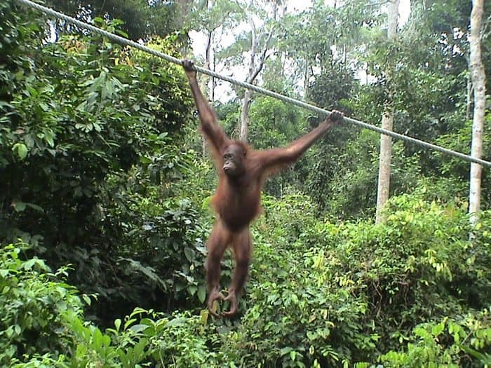 things to do in borneo hanging