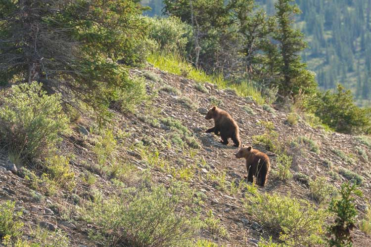 top things to do in Canada | grizzly bear safari in the yukon