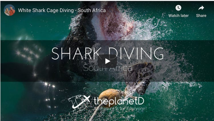 what to do in cape town shark diving