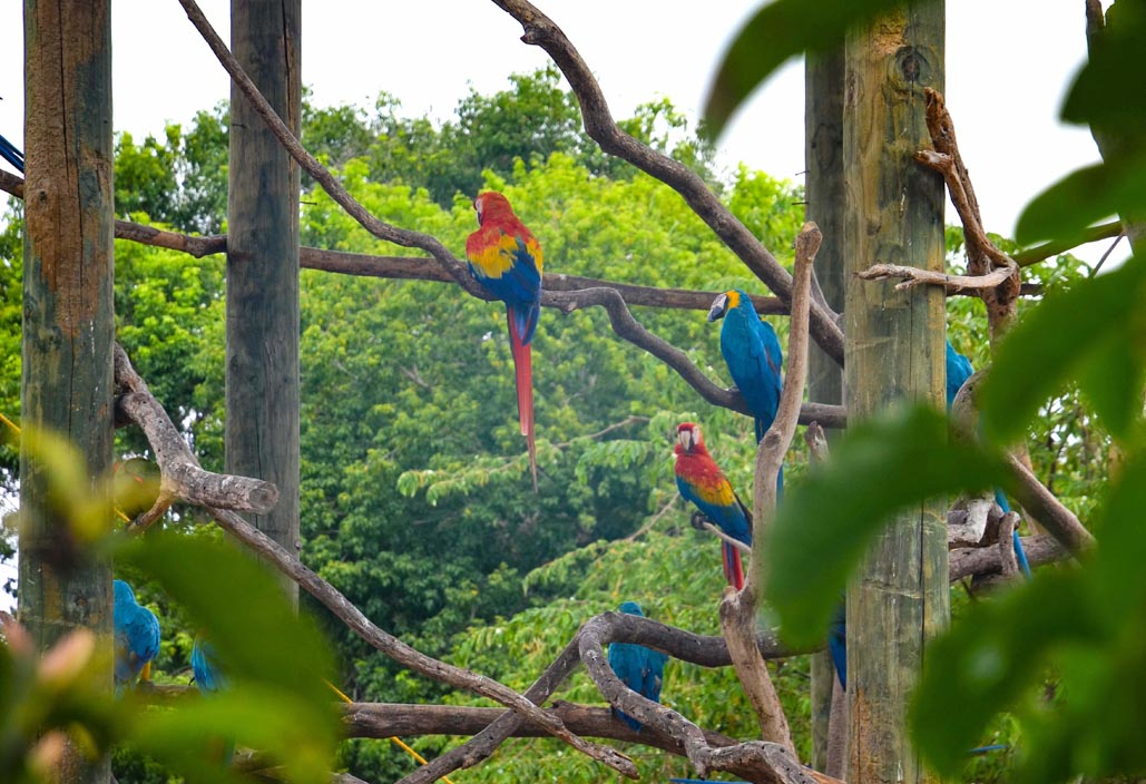 aviary in colombia cartagena