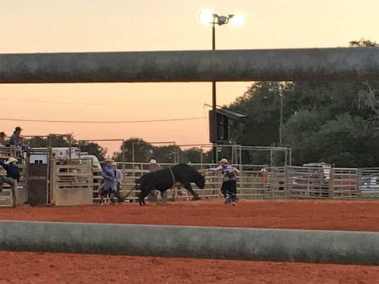 central florida things to do | rodeo