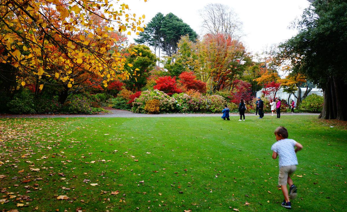 things to do at christchurch | royal botanic gardens