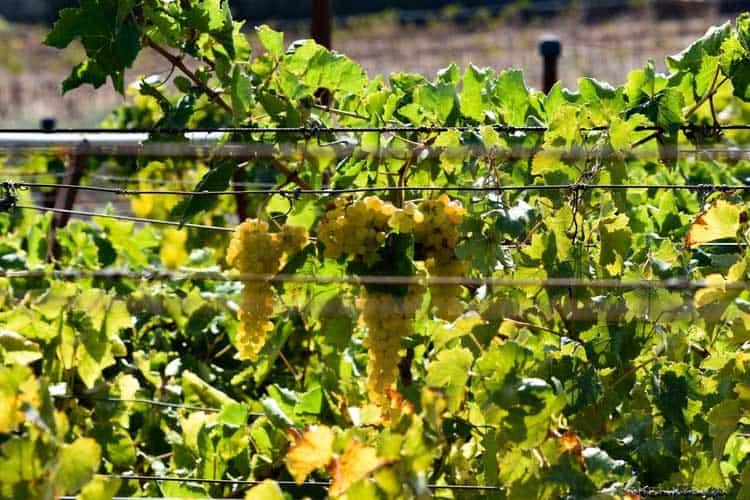 что делать в винодельческом регионе Крит Ираклион