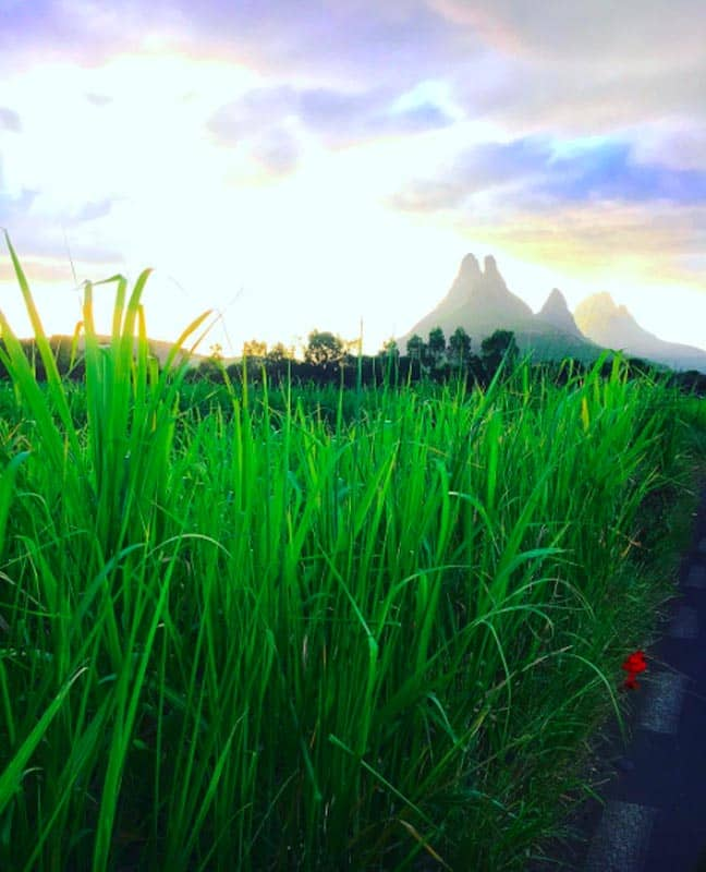 what to do in Mauritius sugar cane