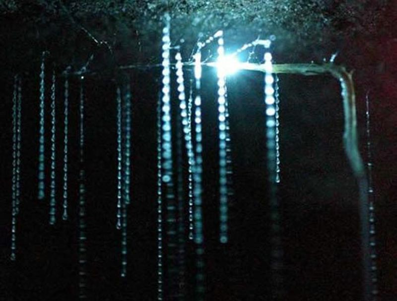 unique things to do in New Zealand glow worms