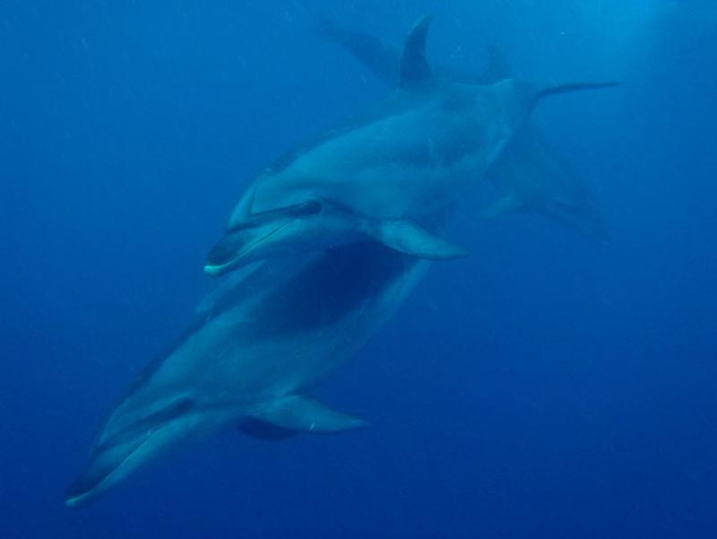 best things to do in New Zealand swim with dolphins