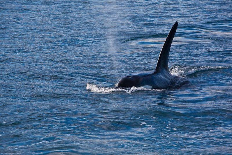 what to do in New Zealand whale watching