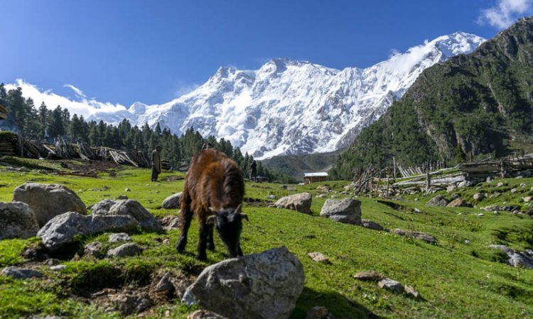 the best things to do in pakistan