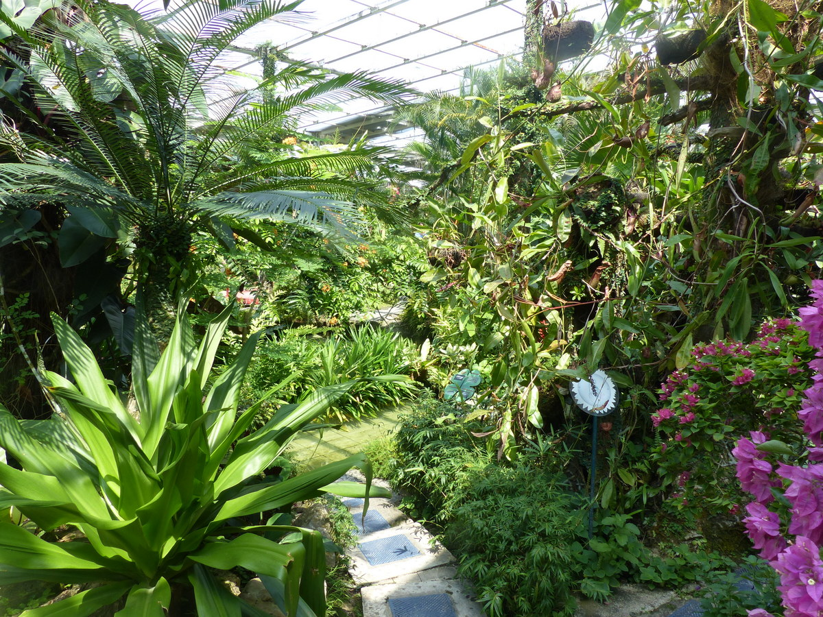 hidden things to do in penang   penang butterfly farm