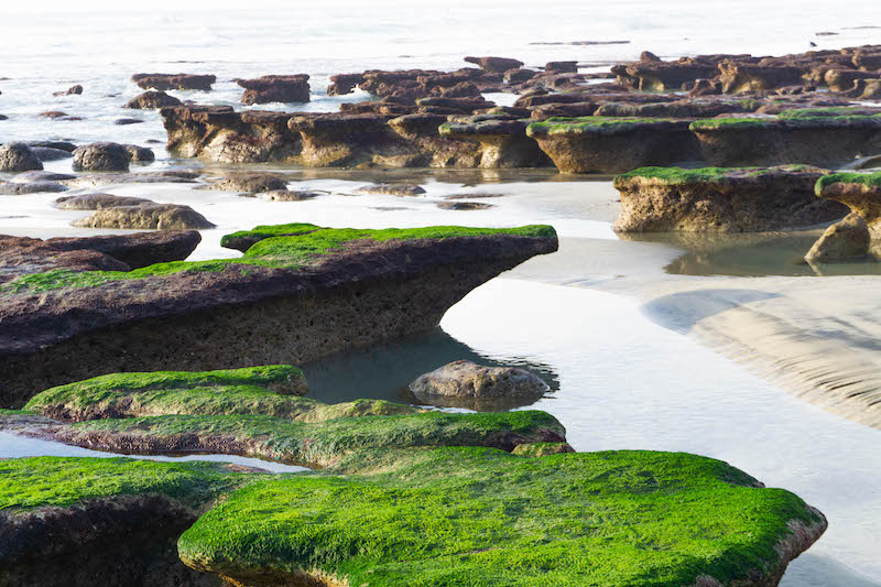 things to do in san diego tide pooling