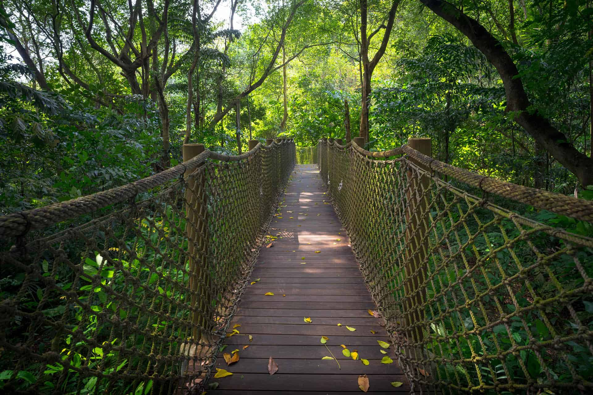 what to do in singapore wetland nature reserve