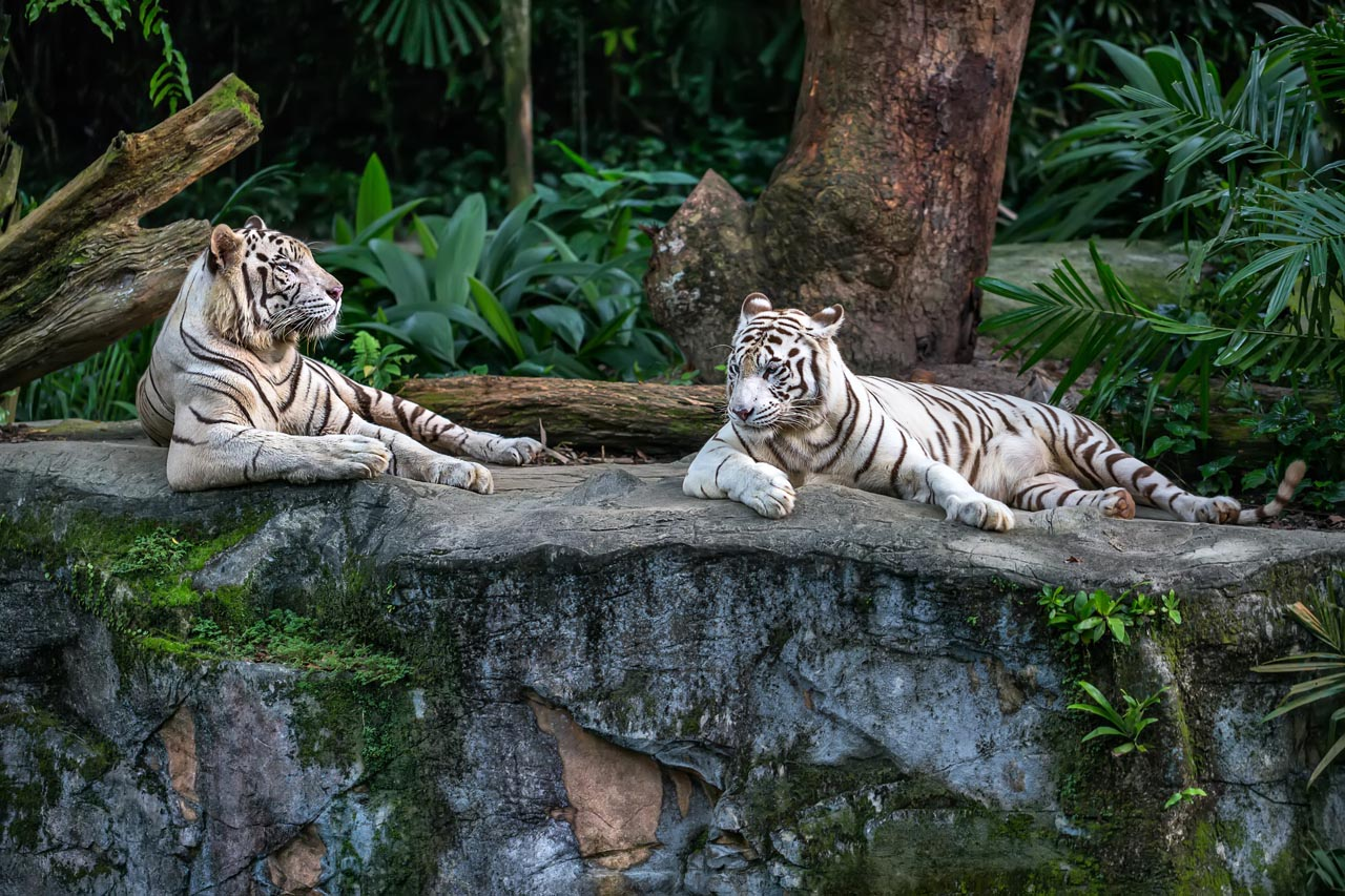 singapore top attractions singapore zoo