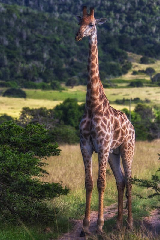 what to do in south africa go on safari