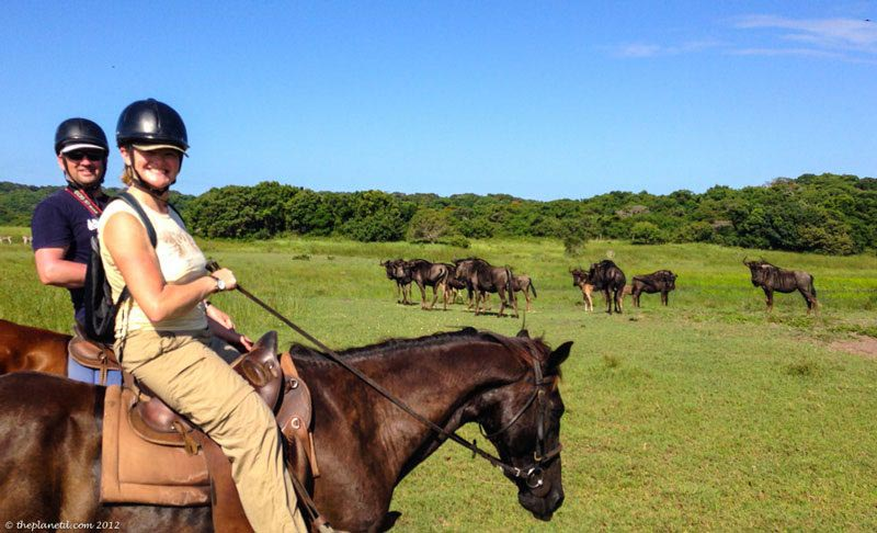 horse safari south africa things to do