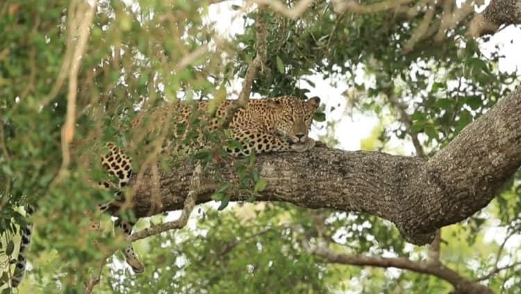 safari sri lanka | what to see in sri lanka