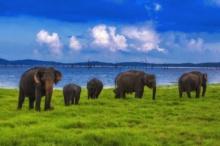 sri lanka has the largest population of asian elephants