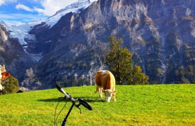 things to do in switzerland cow