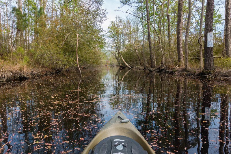 what to do in Virginia Beach kayak wildlife refuge