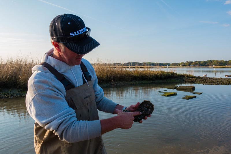 what to do in Virginia Beach oyster tour