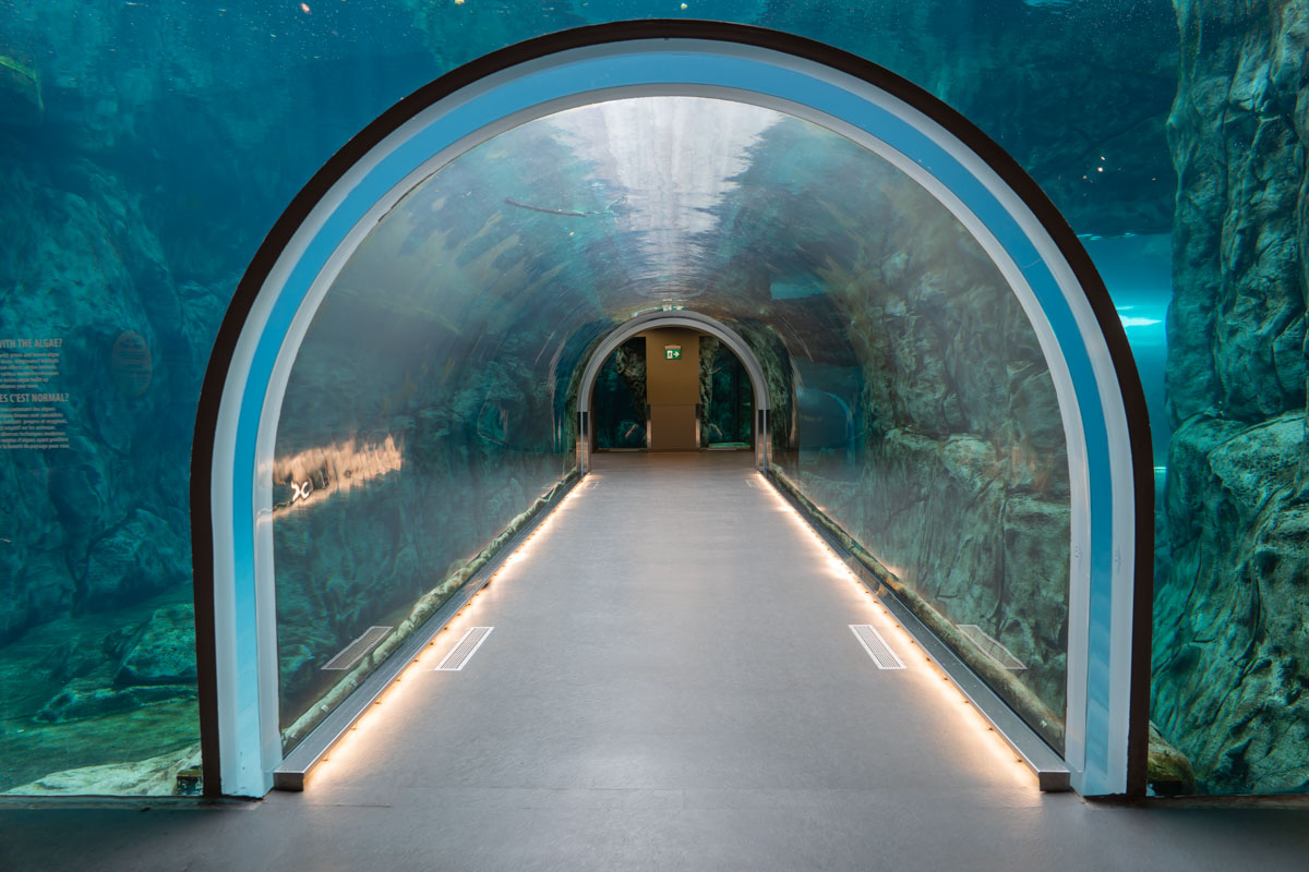 Underwater tunnel at Assiniboine Zoo