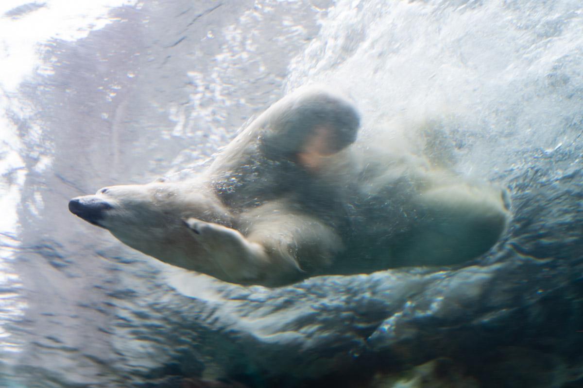 Polar Bear Swim Thing to do in Winnipeg