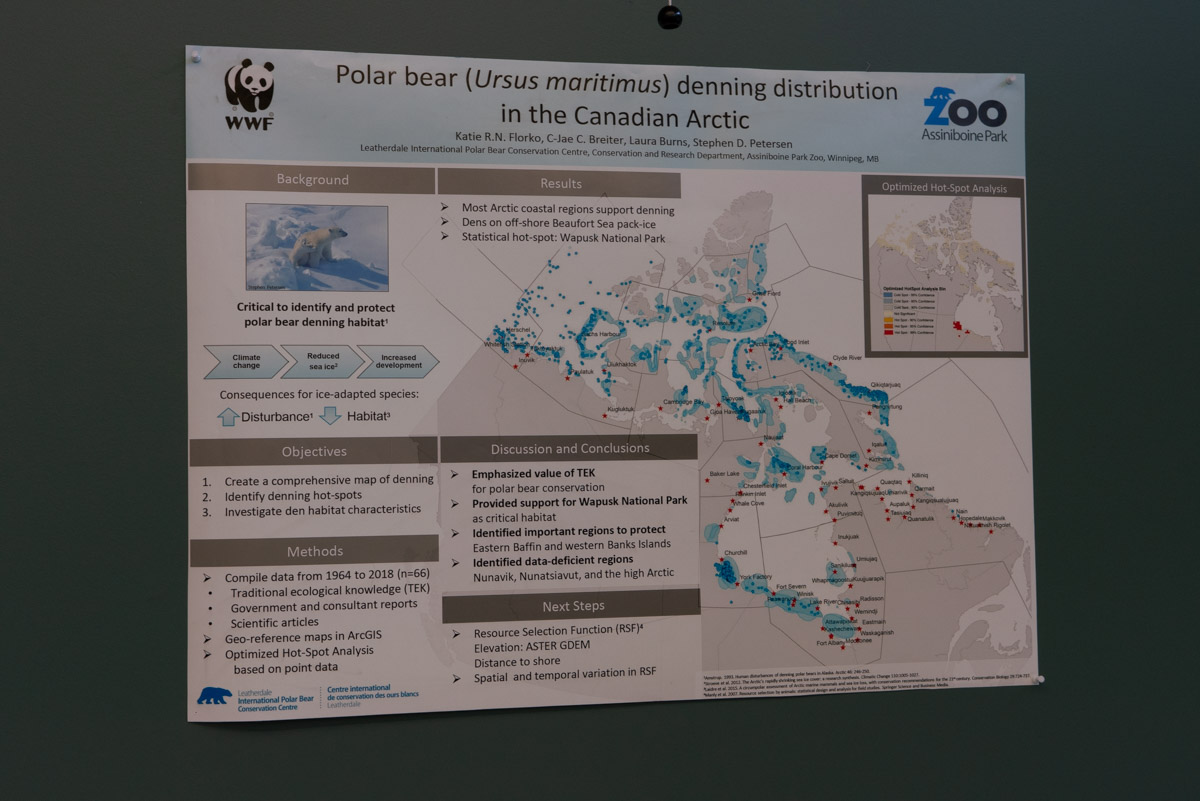 Thing to do in Winnipeg Polar Bear Research