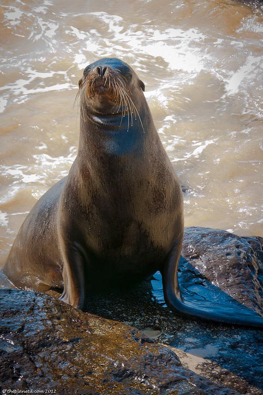 what to do in la paz sea lions