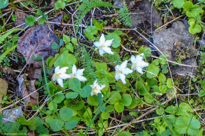 slate islands tundra plants