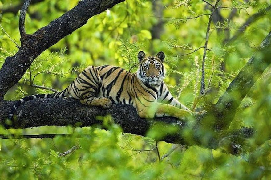 Wildlife conservation in India, safeguarding the future