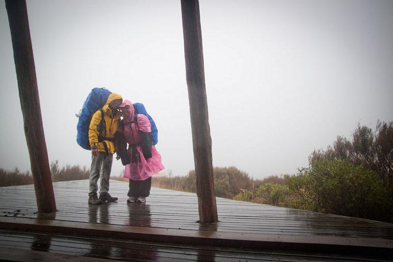 partners in rain