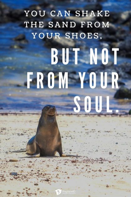 You can shake the sand from your shoes, but not from your soul.