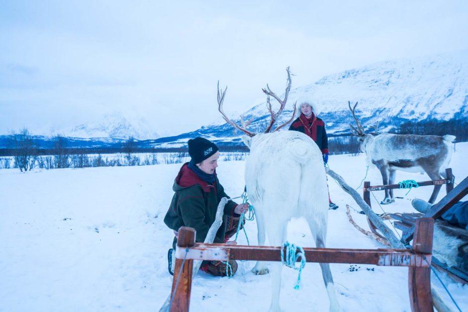 tromso reindeer herders