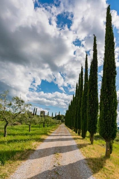 row of trees tuscany