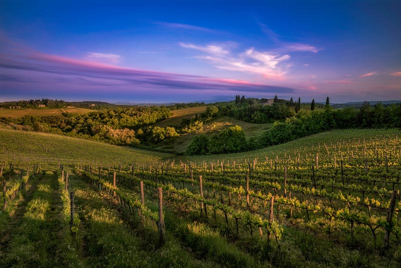 vineyards in tuscany at sunset