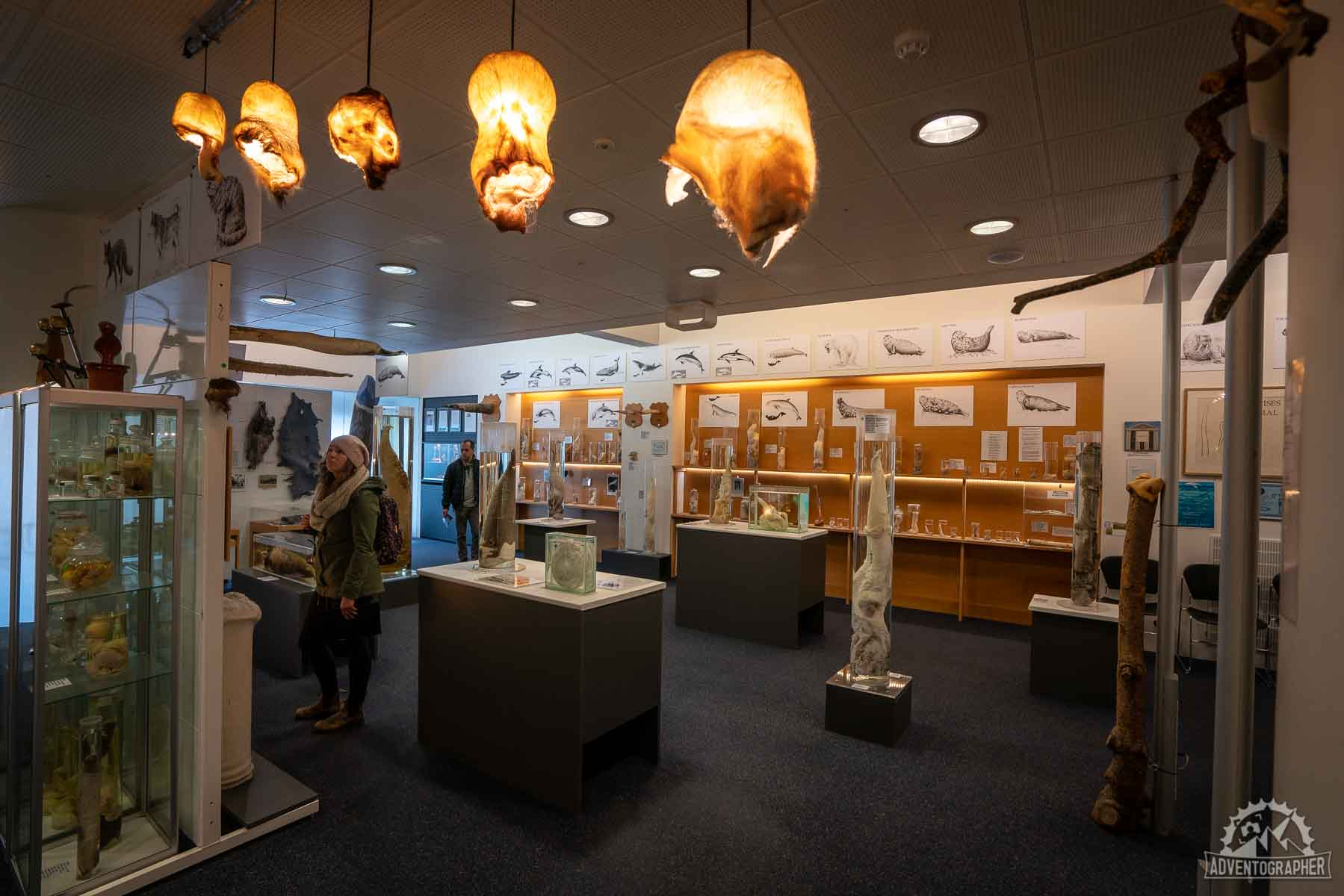 places to go in Iceland the Phalloglogical Museum