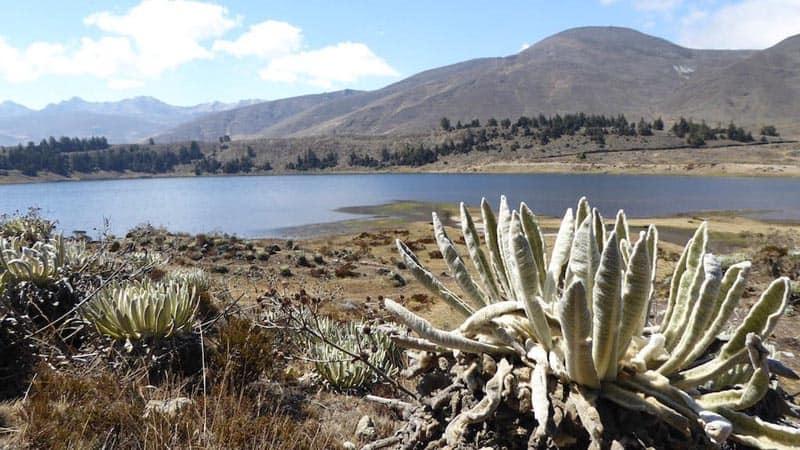 visit venezuela cactus