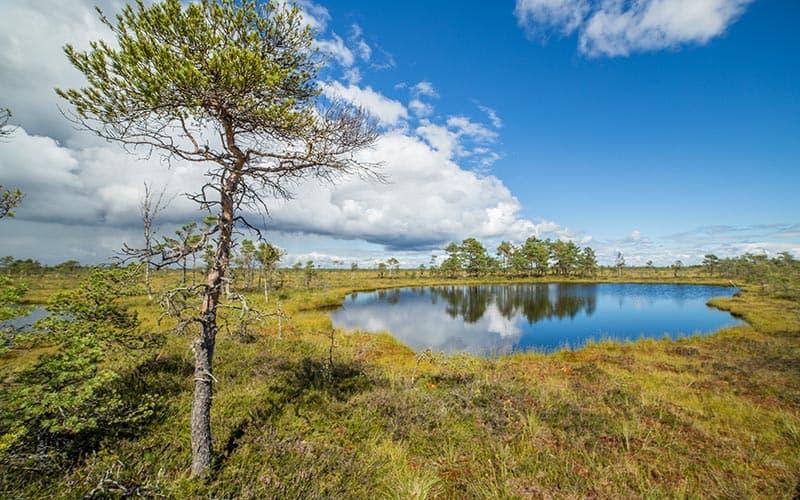 estonia travel nature