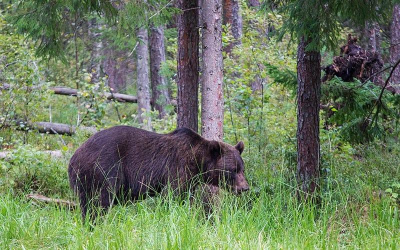 best things to do in estonia | stay in a bear hide