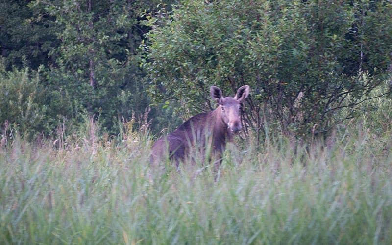 wildlife| visit estonia