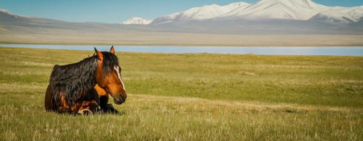 kyrgyzstan travel | for the horses