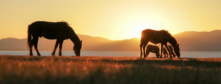 travel kyrgyzstan   horses at sunset