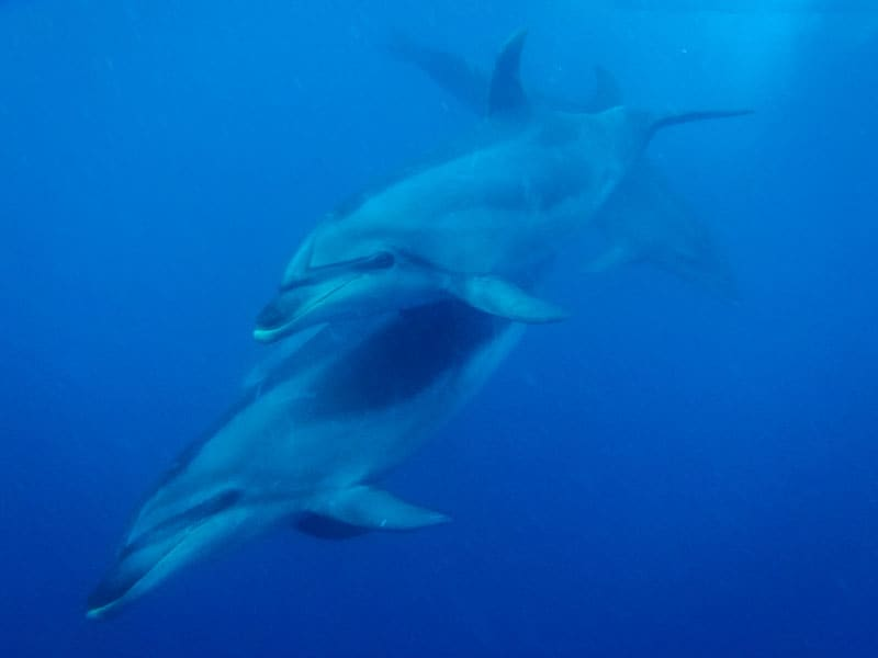 visit new zealand dolphins