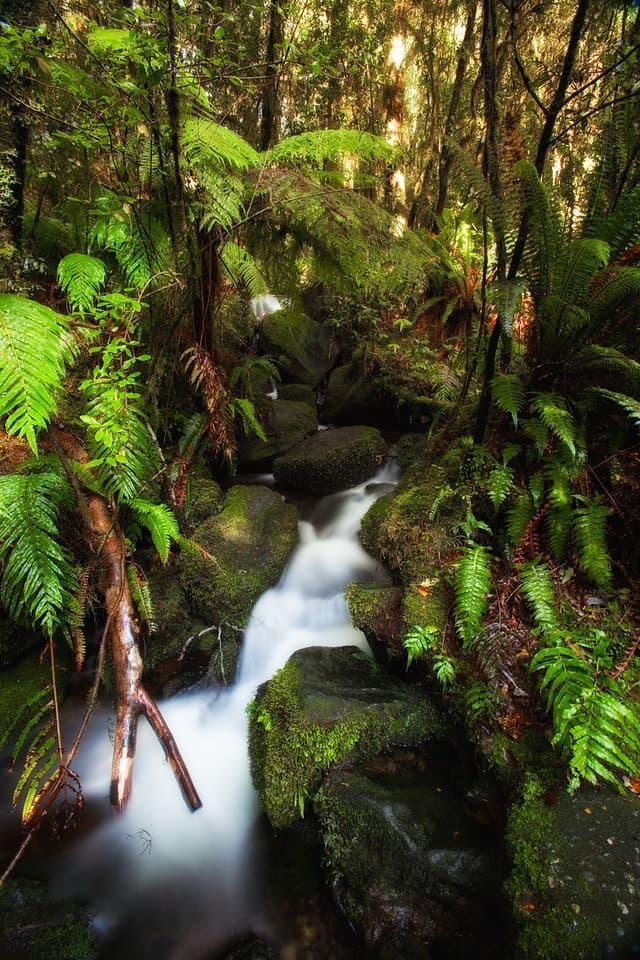 visit new zealand waterfall