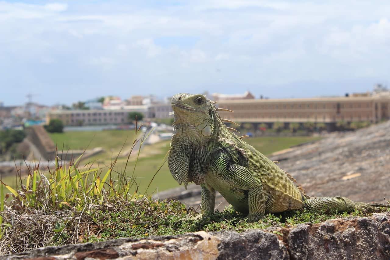 visit puerto rico wildlife