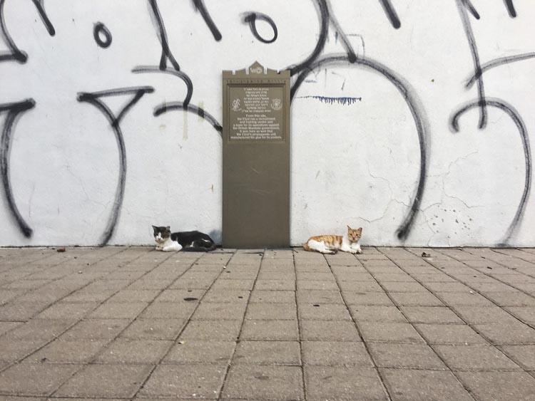 cats of tel aviv