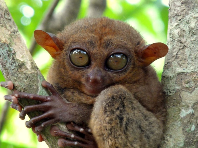 visit the philippines tarsier