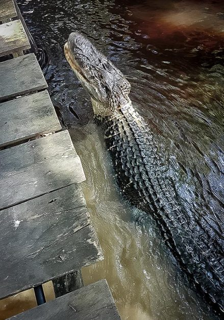visit bolivian amazon