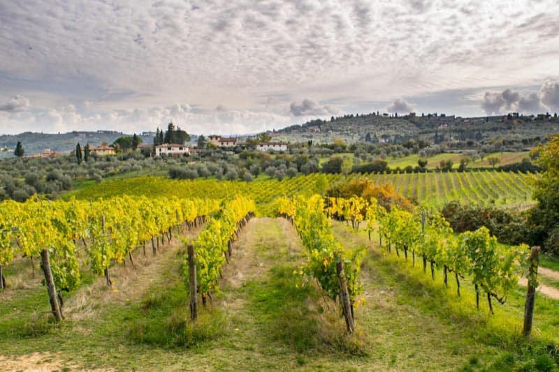 tuscany travel vineyards